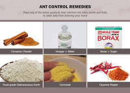 how to get rid of ants permanently