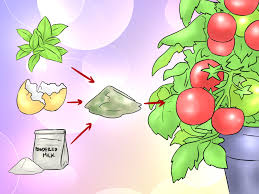 how to make homemade plant fertilizer
