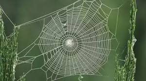 Image result for spider spinning web