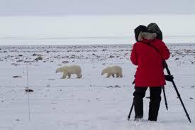 What Is Polar Bear Alley Arctic Kingdom
