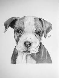 CUTE PITBULL PUPPY Dog,ORIGINAL Graphite Pencil Drawing by Adriana Holmes -  £19.01 | PicClick UK