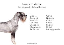 dog food for kidney disease guide