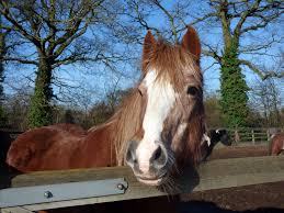 Brave rescue pony turns 22 with special party at Redwings | Charity | The  Gaitpost