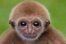 baby monkey makeup saubhaya makeup