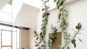 indoor tree planter pots for plants