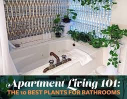 the 10 best plants for bathrooms