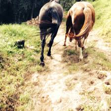 Abigail Murray Equestrian - Home   Facebook