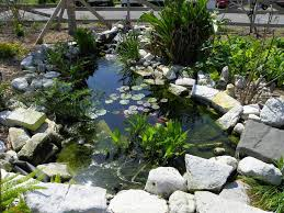ponds and water gardening forum pond