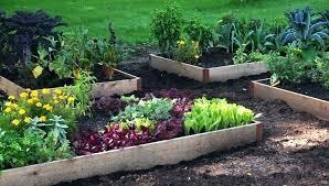 vegetable garden raised mariasalvati info