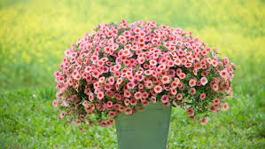 plant colorful beautiful flowers