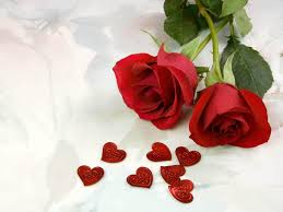rose flower wallpapers top free rose