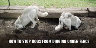 How To Stop Dogs From Digging Under Fence Breeding Business