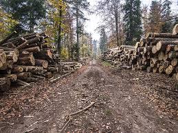Demersuri pentru obținerea unor derogări din partea UE pentru stoparea exportului de bușteni și lemn rotund în spațiul comunitar | DobrogeaNews