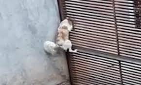 Crafty Canine Makes A Daring Escape By Squirming Through A Tiny Hole In A Brazilian Fence Daily Mail Online