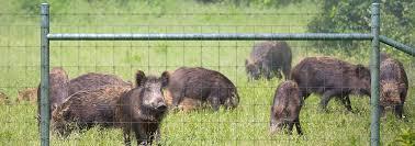 Exclusion Fencing For Hogs Eliminate Hog Problem