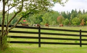 Protect Your Horse Properly With The Right Fencing Horse Canada