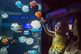 family fun guide to the national aquarium