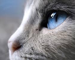 صور عيون حيوانات عيون الحيونات لها سحر خاض شاهد بنفسك فنجان قهوة