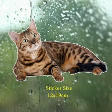 Play Cool Car Sticker Bengal Cat Siberian Funny Automobiles Motorcycles Exterior Accssories Pvc Decal For Bmw Vw Audi 20cm 10cm Car Stickers Aliexpress