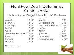 plant root depth determines container