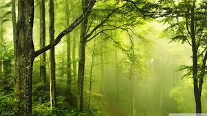 beautiful green forest ultra hd desktop