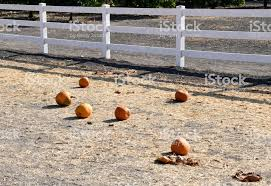 Pumpkins Near The Picket Fence Stock Photo Download Image Now Istock