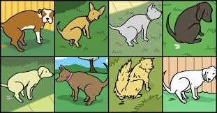 9 colors of dog you should never