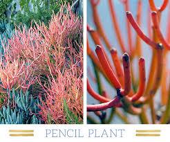 127 stunning desert plants ftd com
