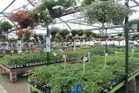 gales garden center westlake