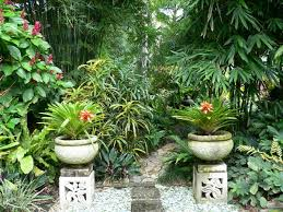 tropical garden plants 34465 tropical