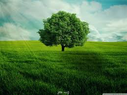 green tree wallpapers top free green
