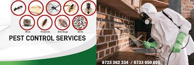 GET JOPESTKIL GUARANTEED PEST CONTROL SERVICES IN KENYA. PEST CONTROL  SERVICES IN KENYA, KENYA PEST CONTROL SERVICES IN KENYA, FUMIGATION SERVICES  IN KENYA, FUMIGATION IN KENYA, PESTS, GETTING RID OF PESTS IN