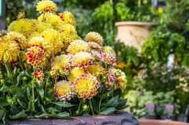 bounty of beautiful bedding plants