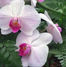 زهور الأوركيد البيضاء بوابة بيوتنا للأسرة العربية