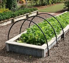 gardening in raised beds gardening