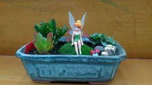 fairy garden miniature garden plants