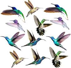 Amazon Com Hummingbird Window Clings 12 X Anti Collision Decals To Prevent Bird Strikes On Doors Windows Static Uv Resistant Non Adhesive Vinyl Cling Deterrent Decal Glass