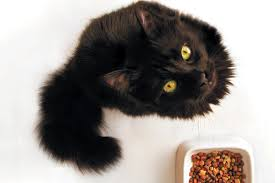 what to do when your cat won t eat
