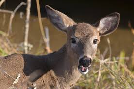deer away from your plants and garden