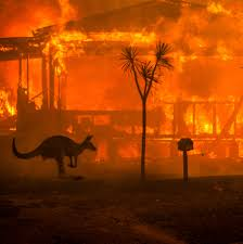 The Australia Fires: Everything You ...