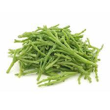 salicornia venda