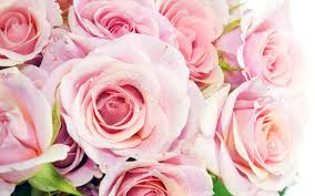 roses tumblr backgrounds flower background other 图片tumblr 图片