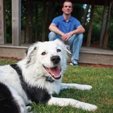 Petsafe Wireless Dog Fence Equipet