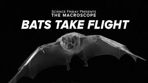 Curious Kids: why bats sleep upside down, and other stories of animal  adaptation