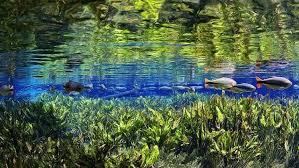 Flutuação Aquario Natural - BonitoMS |