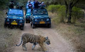 Ranthambore – Prime Destination for Wildlife Photography in India
