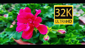 8k ultra hd 80 fps and high resolution