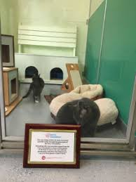 Cats Archives Friendship Animal Protective League Of Lorain County