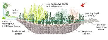 build a rain garden 12 000 rain gardens