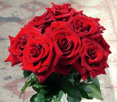 free images blossom petal love